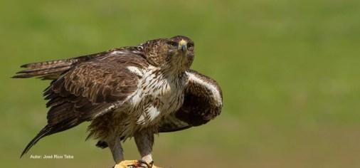 Sobre escalada y aves rapaces
