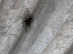bugs (5)