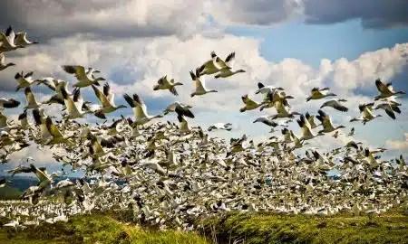 kako-ptice-lete