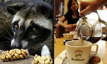 kako-se-proizvodi-najskuplja-kava-na-svijetu