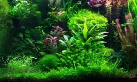 kako-saditi-biljke-za-akvarij