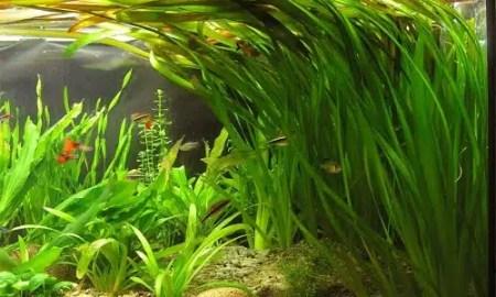 kako-transportirati-biljke-za-akvarij