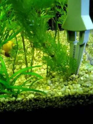 sadnja biljke hvataljka1