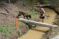 US Canine Biathlon (30)