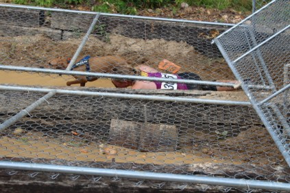 US Canine Biathlon (53)
