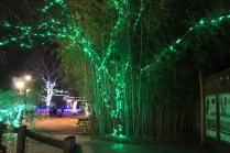 Zoolight Safari 2019 (50)