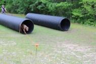 US Canine Biathlon (39)