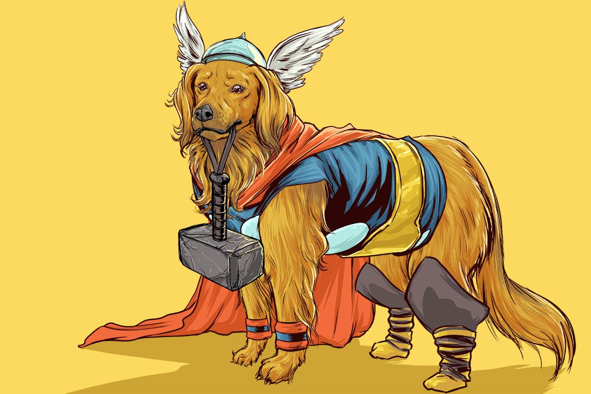 Gallery Dogs Dressed As Superheroes