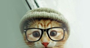 chat lunette tuque
