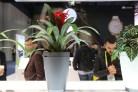 Pot à fleur de Parrot qui arrose vos plantes automatiquement