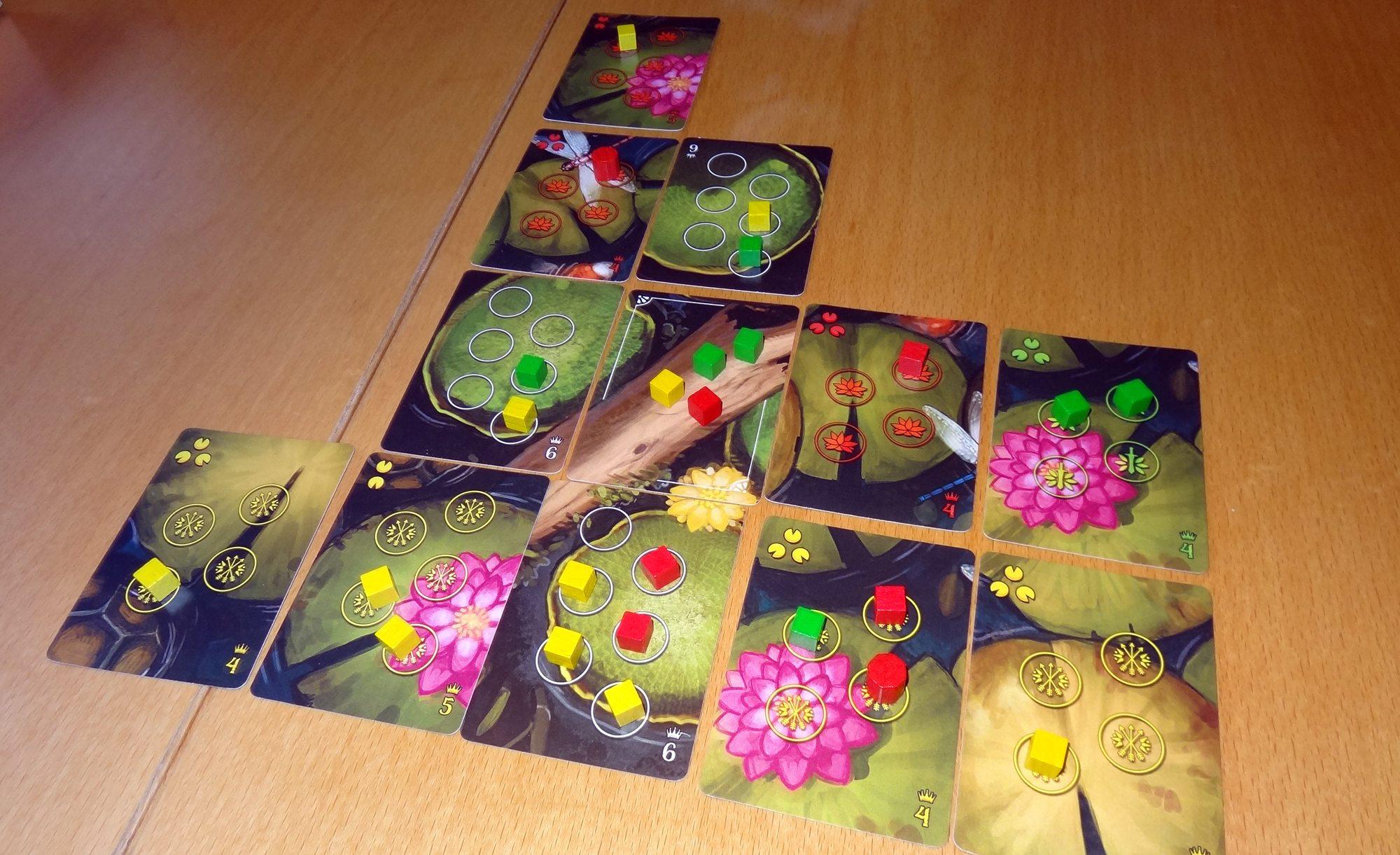Bullfrogs in play