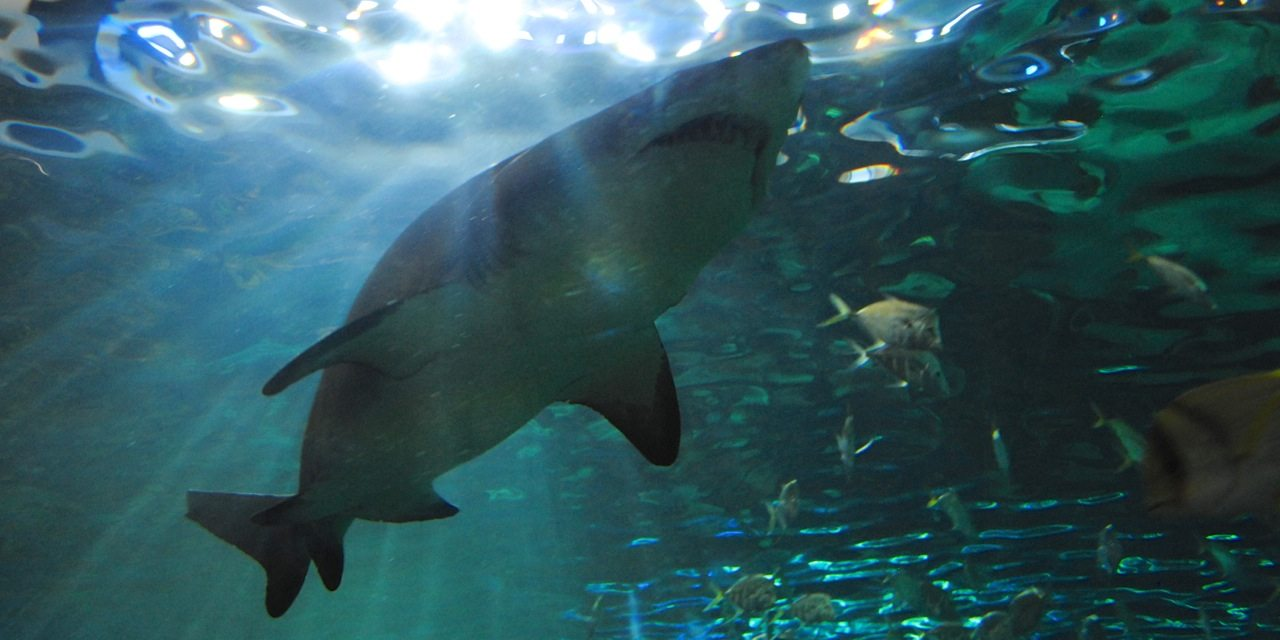 shark passing overhead