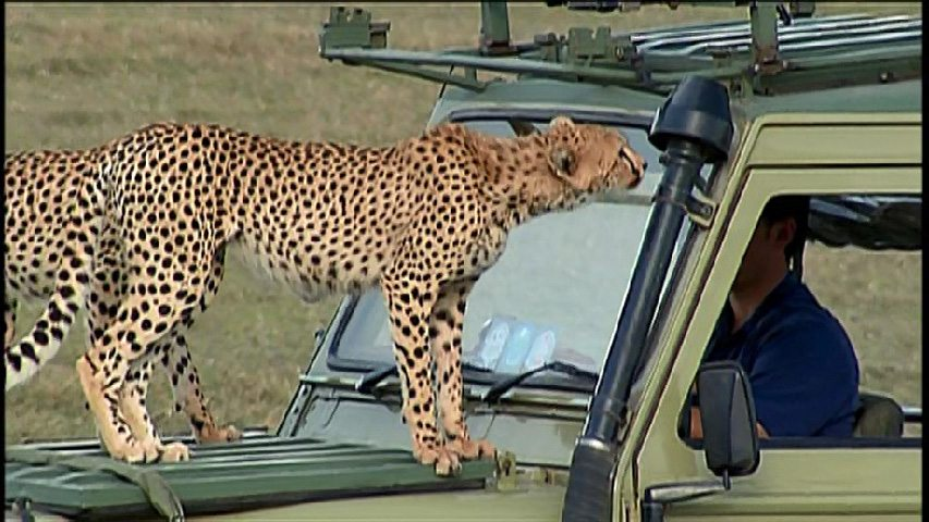 Wild Kratts Jeep with Cheetahs