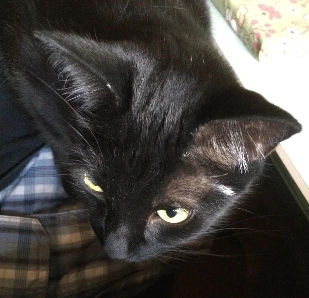 Ezra sometimes prefers my lap. Photo: Jenny Bristol
