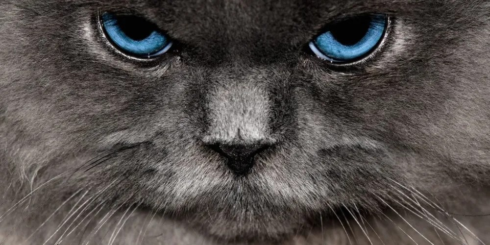 Angry.Cat