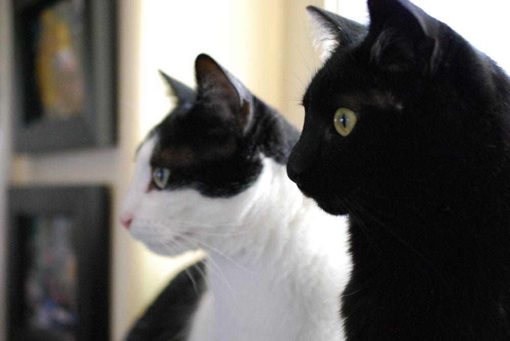 Lavinius and Ezra. Photo: Jenny Bristol