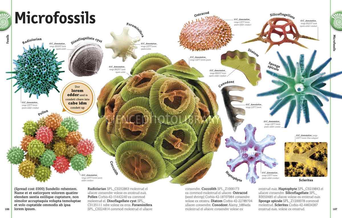 Randgemmicrofossils