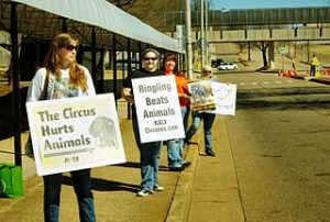 Will circus' story end: PETA protests protest outside Ringling Bros. in Knoxville, TN.