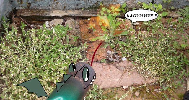 Garden flamethrower in action, with cartoon adjustments