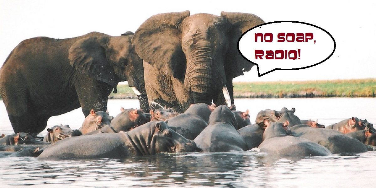elephants and hippos in the water