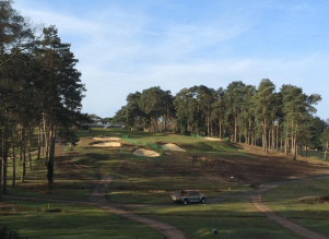 Camberly Heath #2 - After tree removal, with open space and beautiful contours of the land revealed.