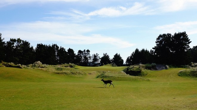 PacificDunes7-Approach-JC