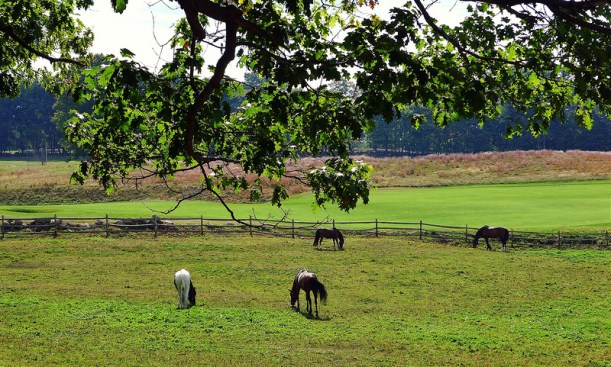Myopia-Horses-JC.jpg