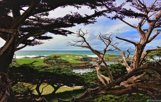 CypressPoint16-Trees-JC.jpg