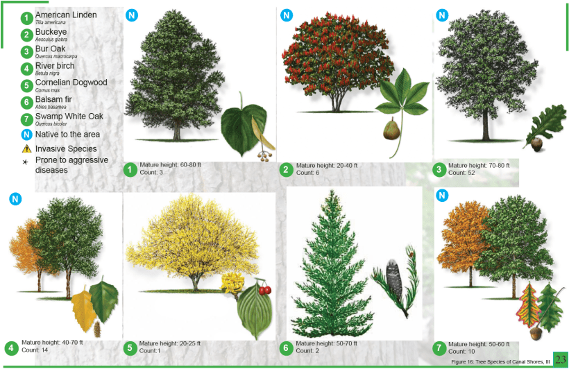 CanalShores-TreeInventory6.png