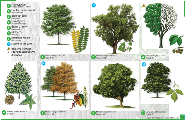 CanalShores-TreeInventory8.png