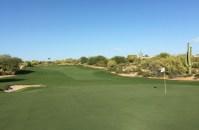 DesertForest15-GreenBack