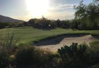 DesertForest17-GreenBack