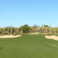 DesertForest6-Approach
