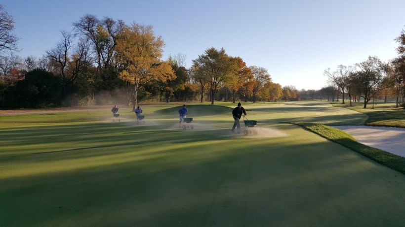 BobOLink1-GreenTopdressing