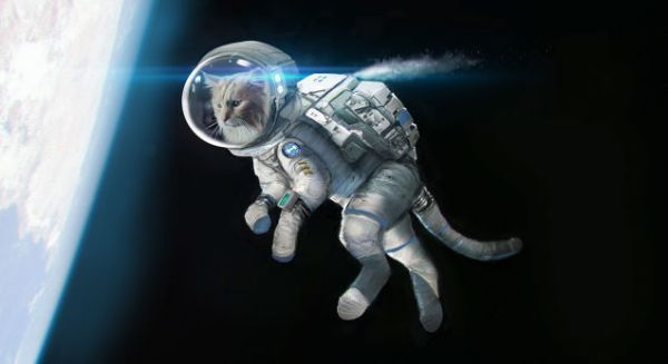 In Space no one can hear you Meow #cats in #space [# ...