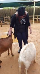 Goat whispering.
