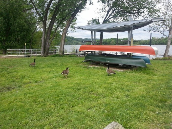 A few geese gathering to see us off!
