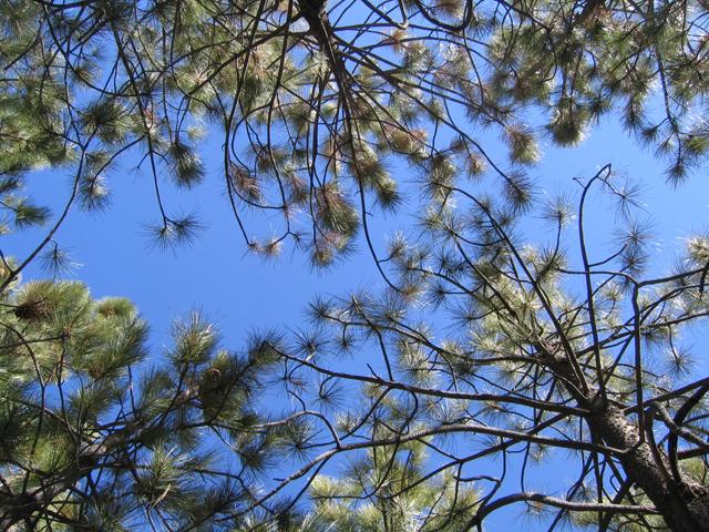 Trees &Sky