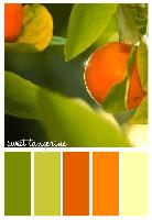 Sweet Tangerine Colour Palette
