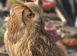The Bengal Owl of Heilan-Spirit.