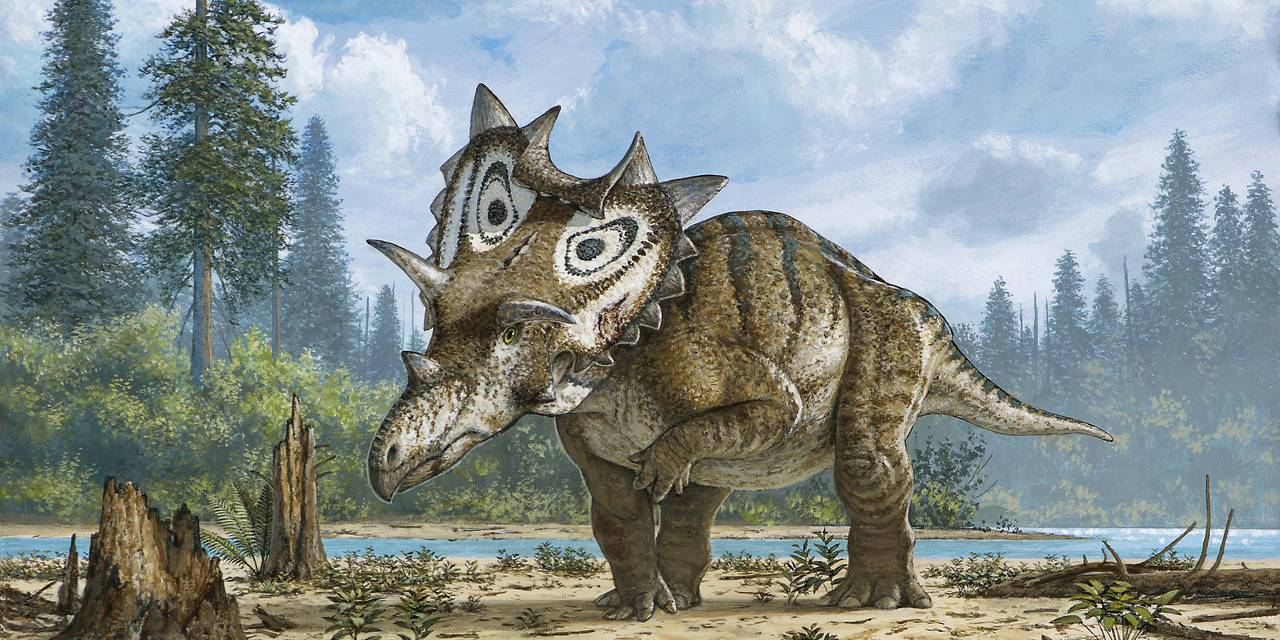 Meet Two Horny New Dinosaurs: Spiclypeus & Machairoceratops