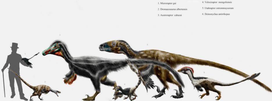 dromaeosaur size comparison chart