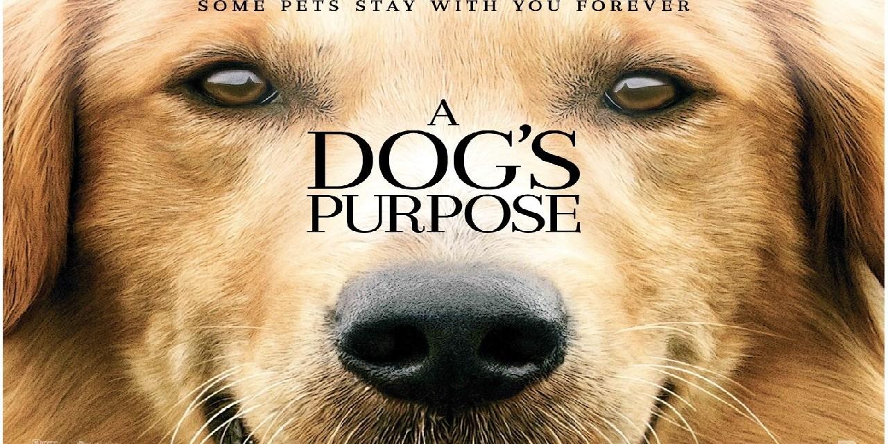 WIN A Dog's Purpose Prize Bundle!