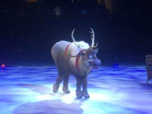 Isn't Sven the cutest thing on four legs? Image: Dakster Sullivan