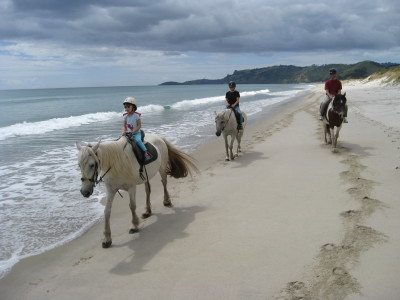 Horse Trekking on Pakiri Beach - In Search of Smaug's Lair ...