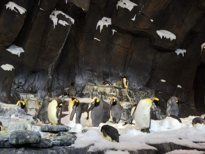 Penguins! Image: Dakster Sullivan