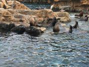 Playful sea lions. Image: Dakster Sullivan