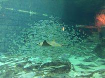 Watching this school of fish was very interesting. Image: Dakster Sullivan