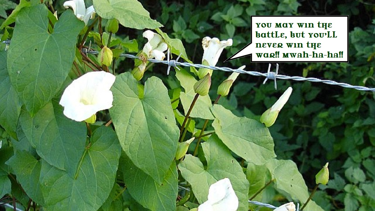 "white flowers on copious green-leaved vines growing around barbed wire. A call-out as if from one flower head reads ""You may win the battle, but you'll never win the war!"""