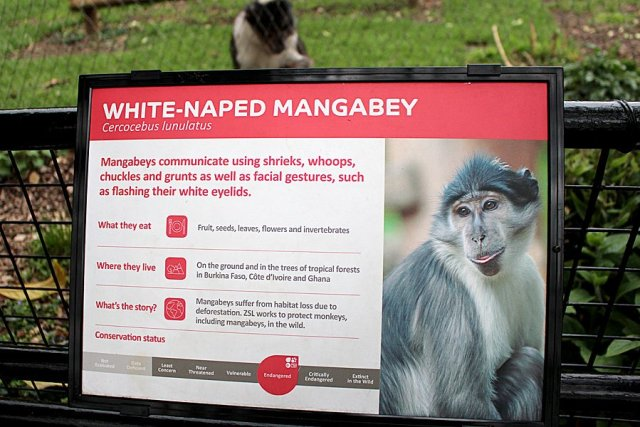 A Conservation Sign at London Zoo, Image: Sophie Brown